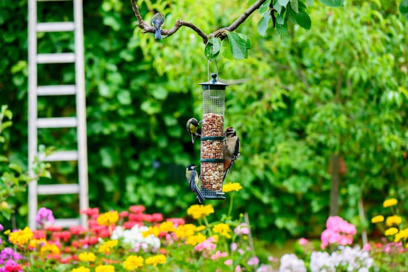 Birdfeeders in Fairy Land