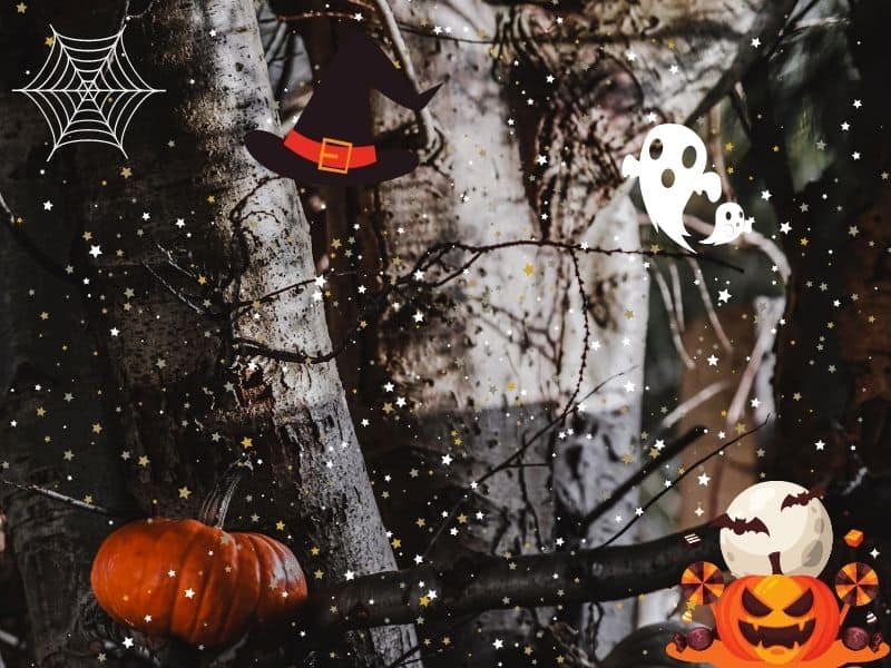 Help Tommy Tinker Decorate a Halloween Tree
